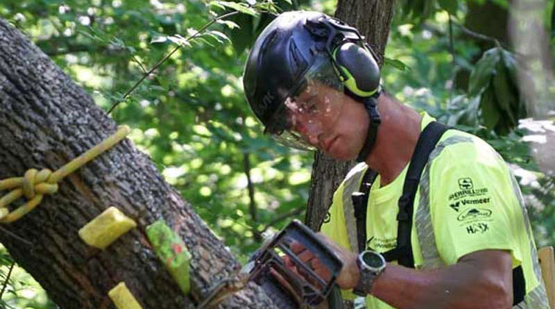 tree cutting policy at hawk mountain pittsfield